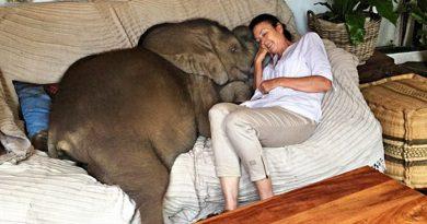 бебе слон