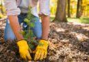 Кампания за ненужна хартия във Варна помага за посаждане на дръвчета